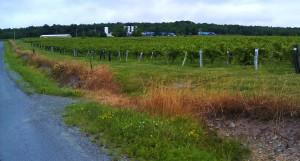 road side vineyard