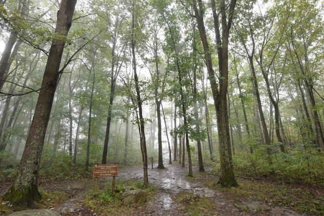 baughman trail overlook trees fog foggy forest rainy day