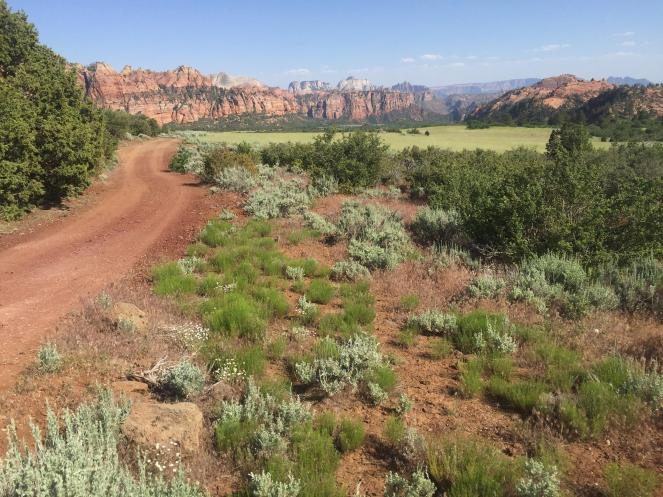 dirt road leading to the rocky hills of Zion National Park
