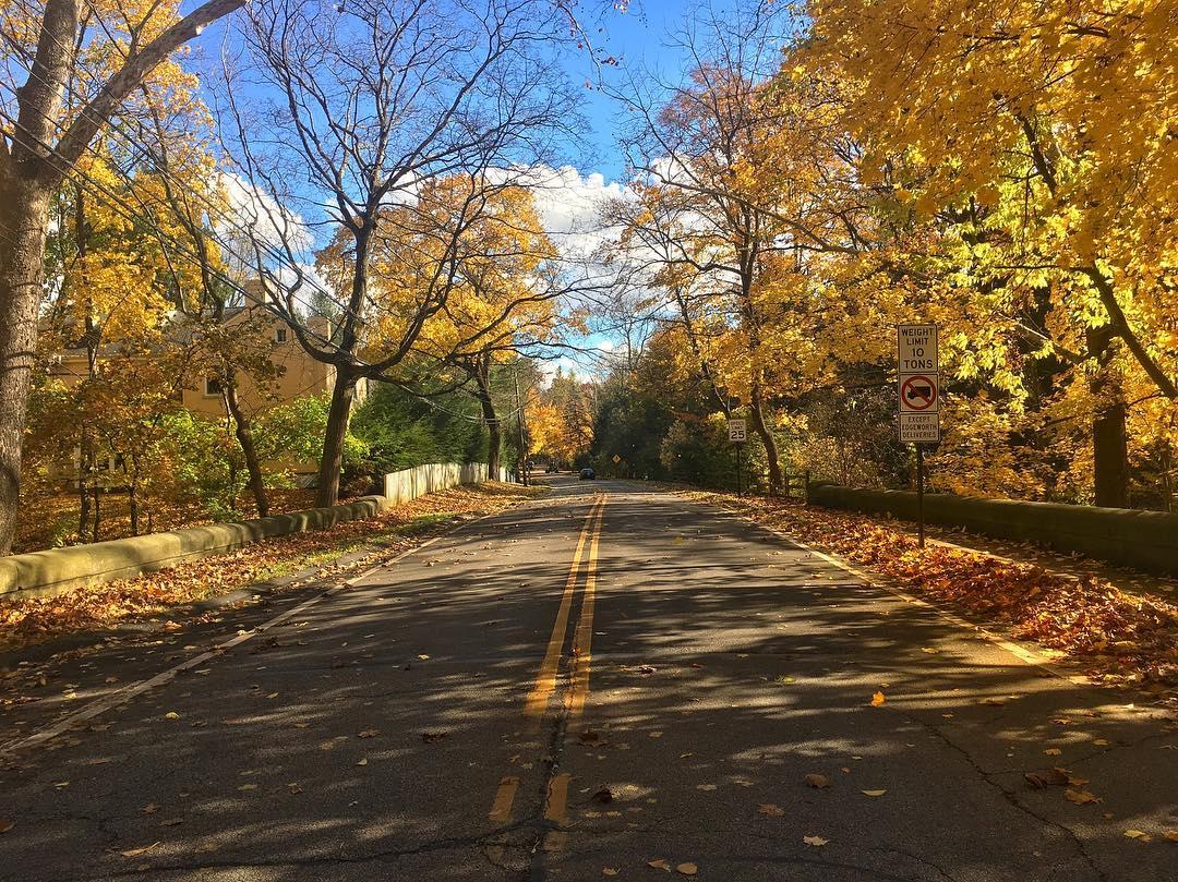 fall colors leaves falling back road no traffic