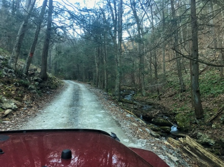 forest road hunting road dirt road creek