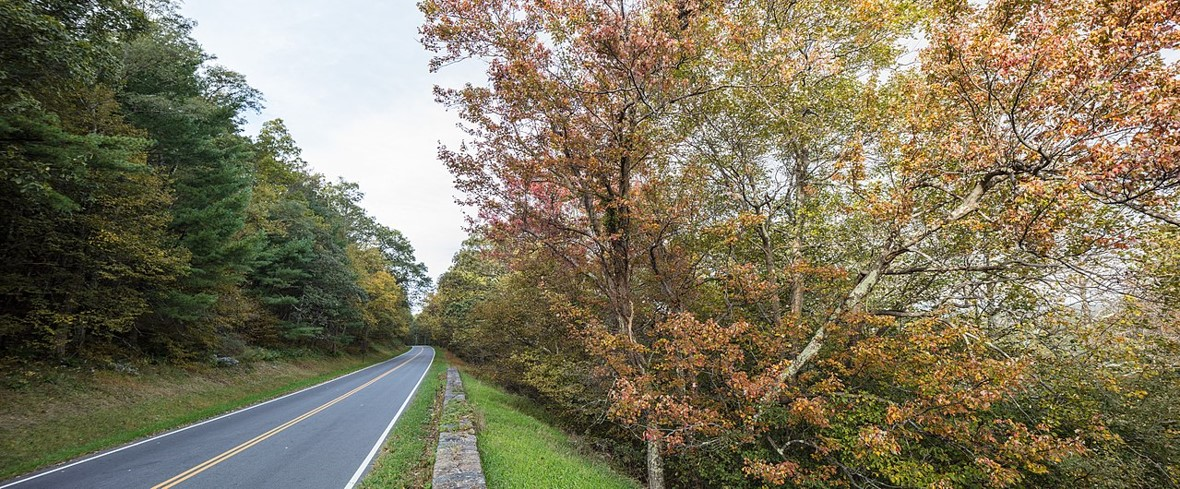 fall colors forest trees skyline drive virginia